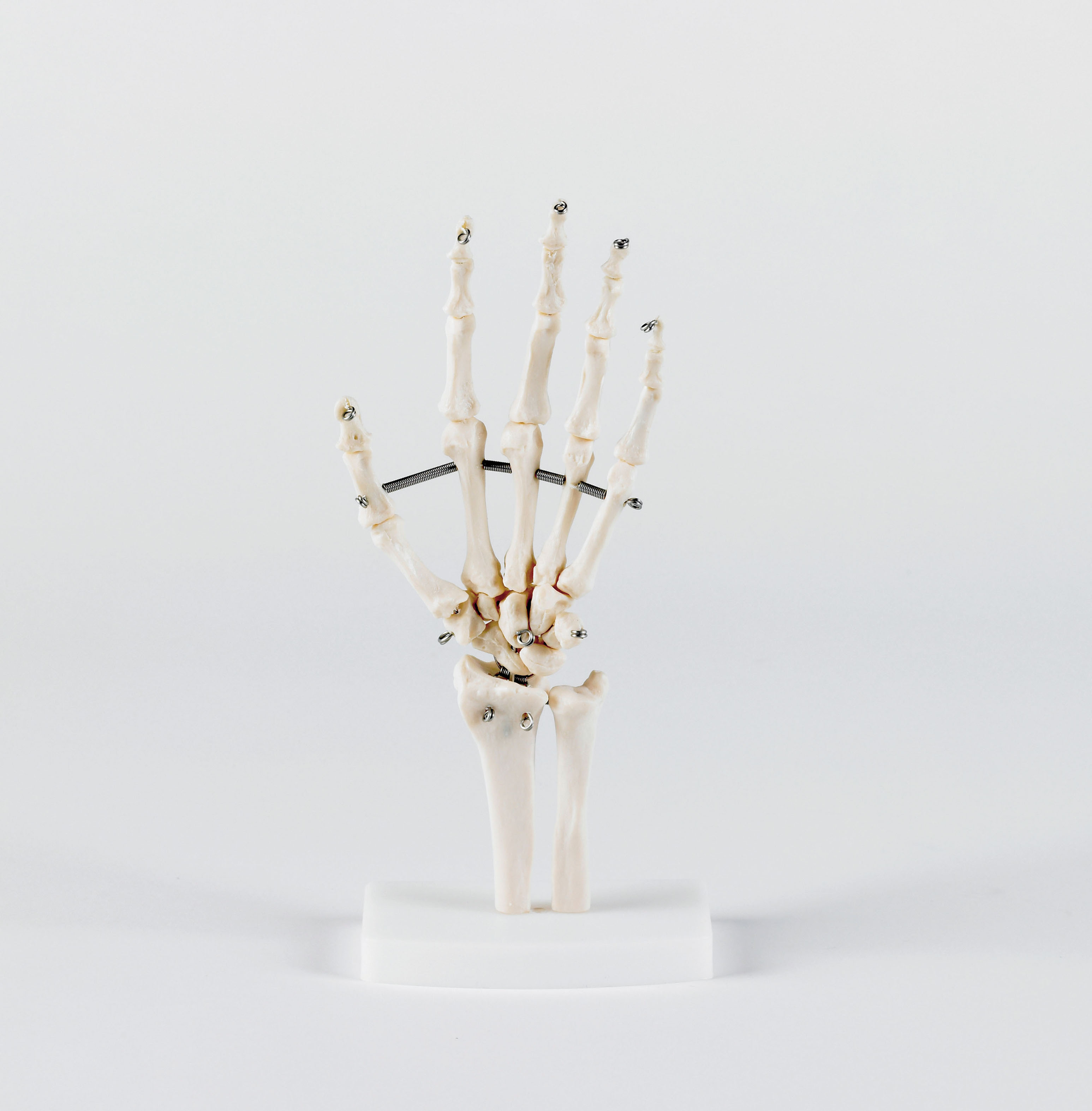 Articulation de la main